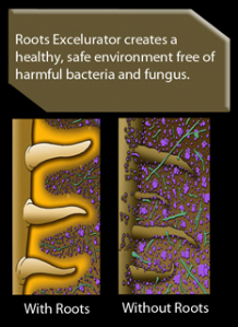 Roots Excelurator creates a safe environment free of harmful bacteria and fungus.